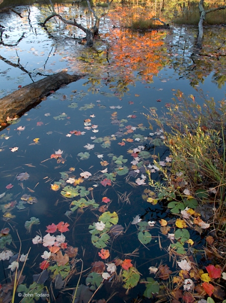 Harvard Pond, Petersham, MA