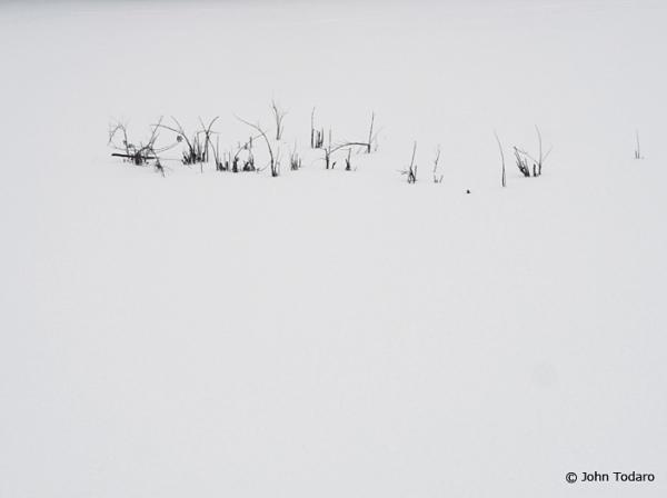 twigscape II