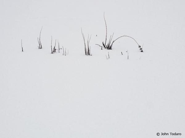 twigscape