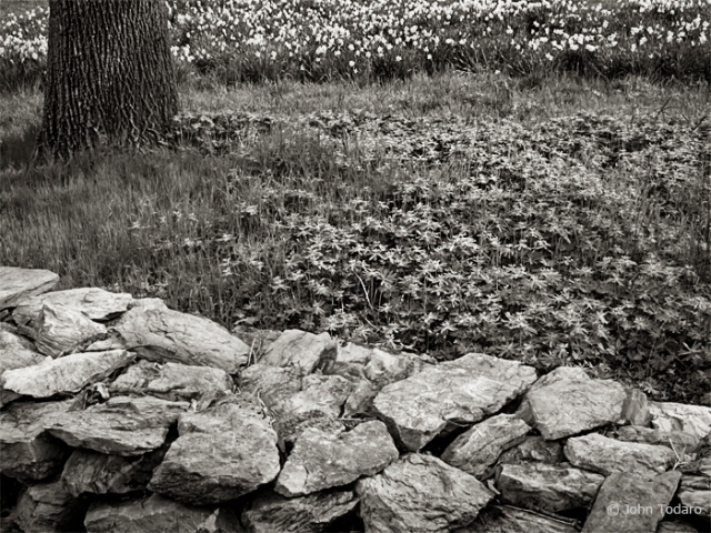 stone wall in april