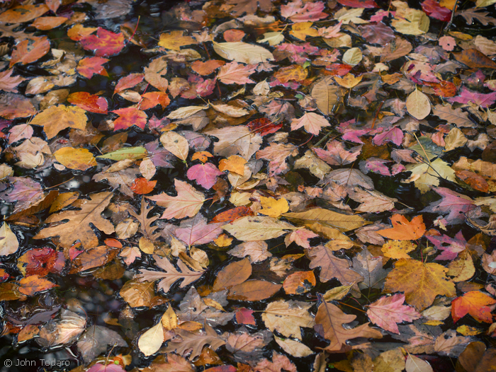 pond leaves