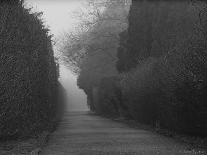 lane in gray