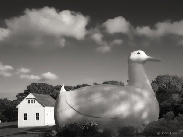 big duck monochrome