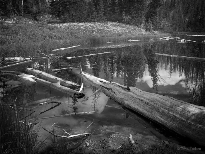 cedar breaks pondscape