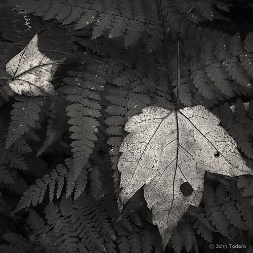 delicate decay