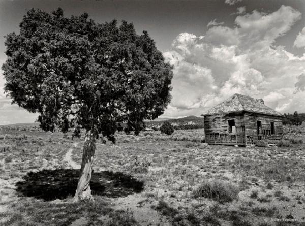 juniper and school