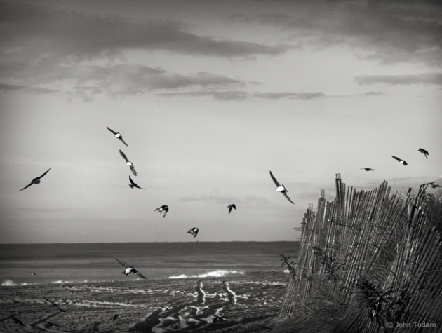 migration monochrome