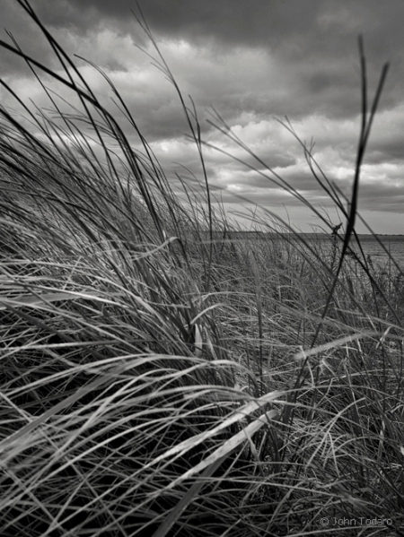 wind and grass