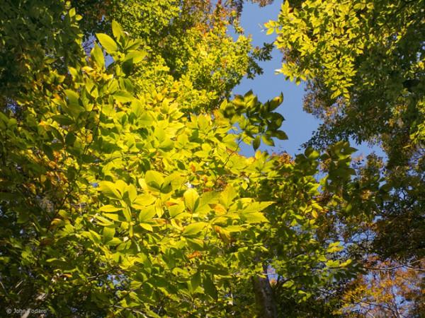 Canopy - Stony Hill Preserve