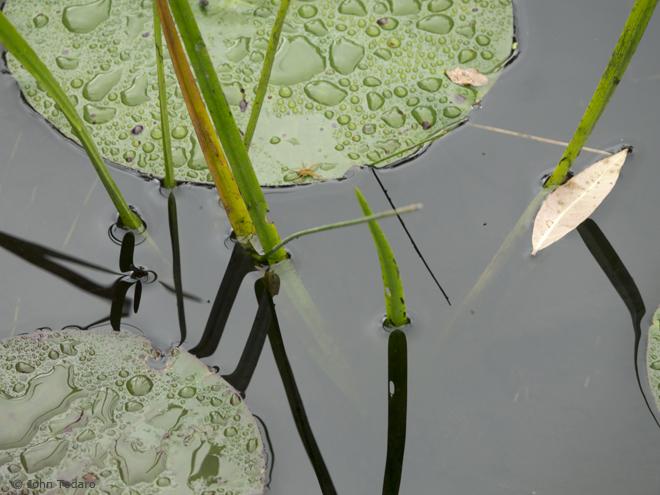 cranberry bog detail IV