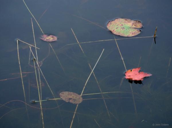 crooked pond II
