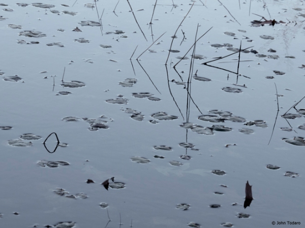 crooked pond shallows