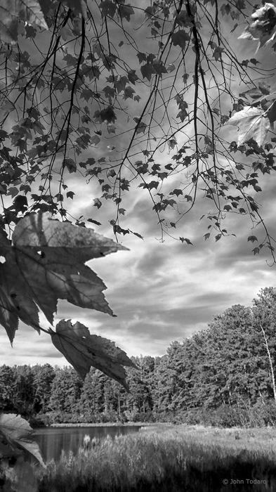 fall in shades of gray