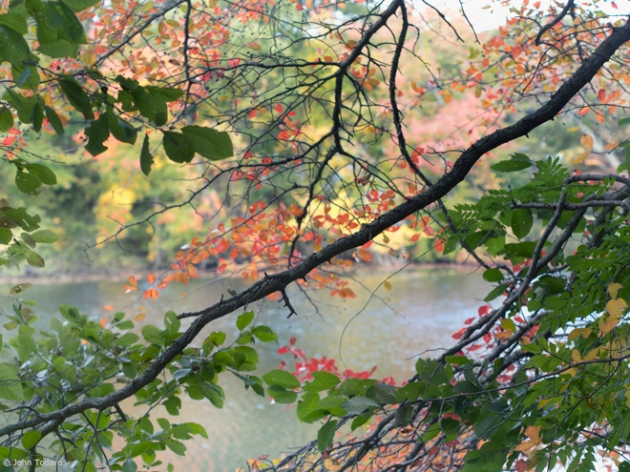 pond branches II