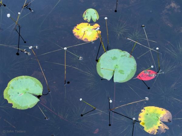scoy pond detail