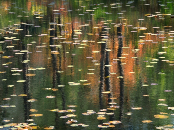 staudinger's pond