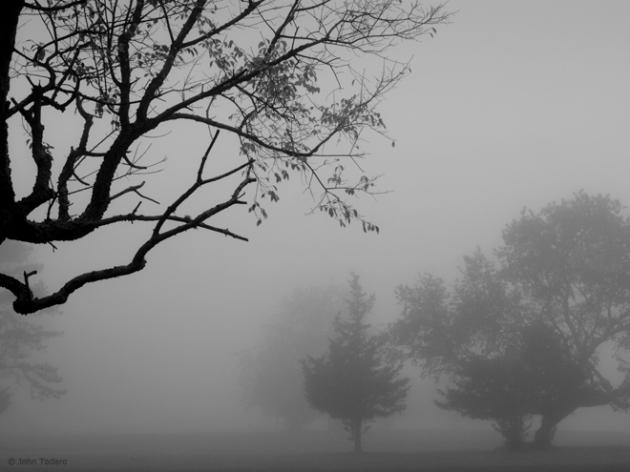 Trees in Fog - Barcelona Neck