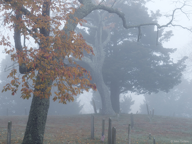 trees in fog - old burying ground