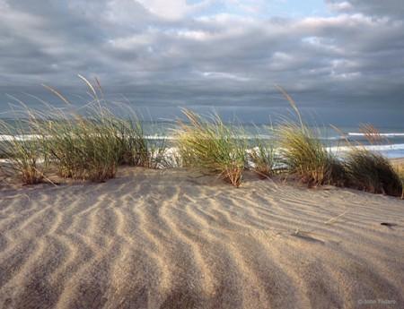 Beach Study IV