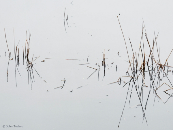 pond sticks in winter