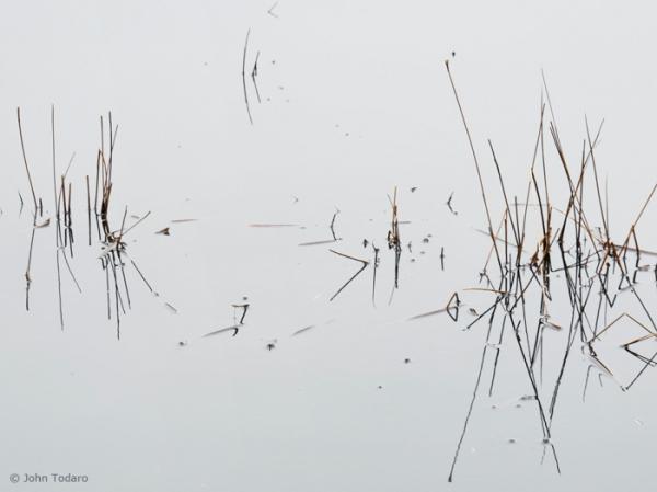 pond sticks in winter