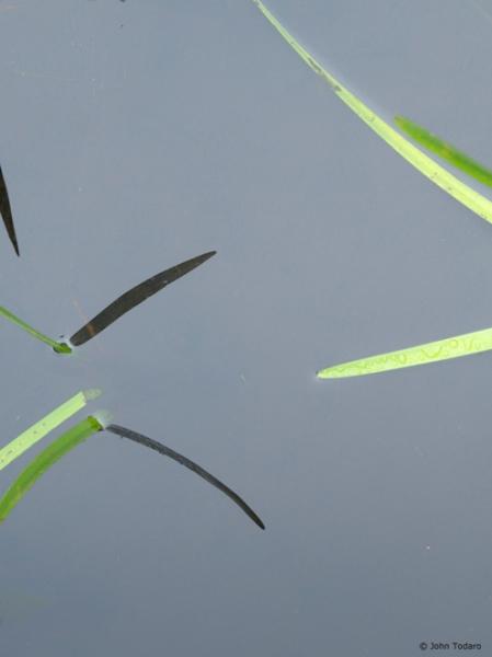 seven blades