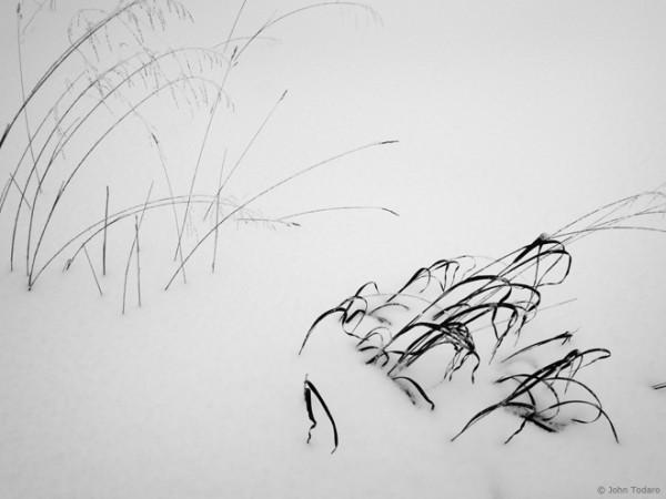 blizzard grass