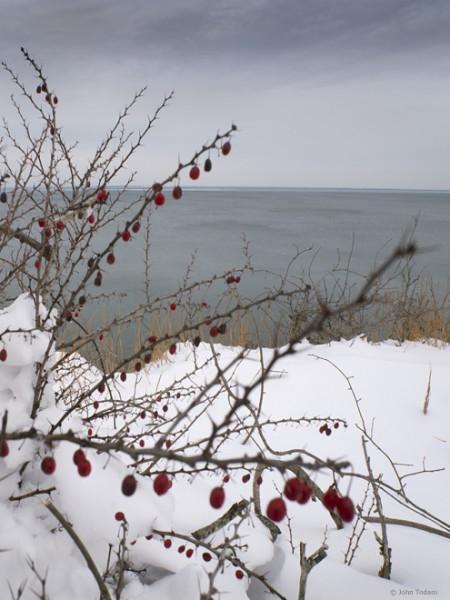 bluff berries