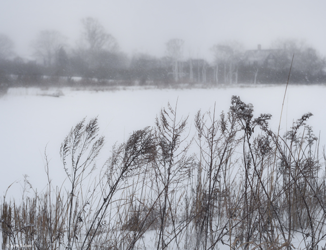 Hook Pond Snowscape
