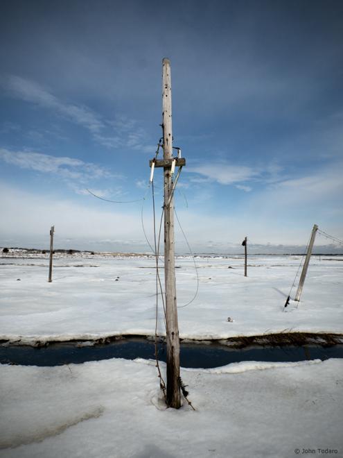 Salt Marsh Poles