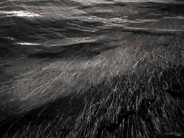 Tidal Grass