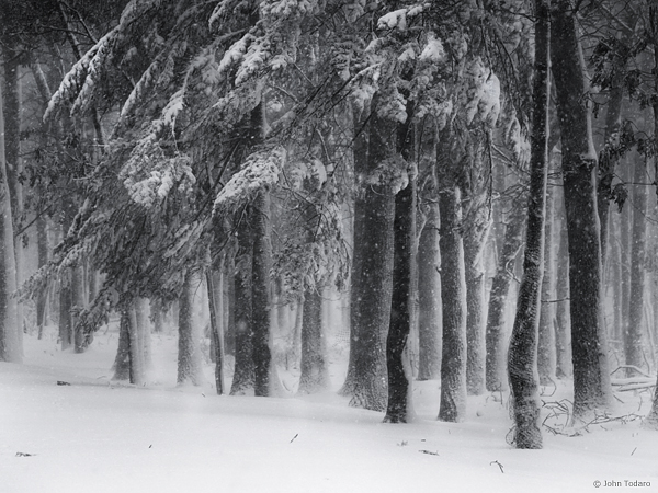 Blizzard Trees
