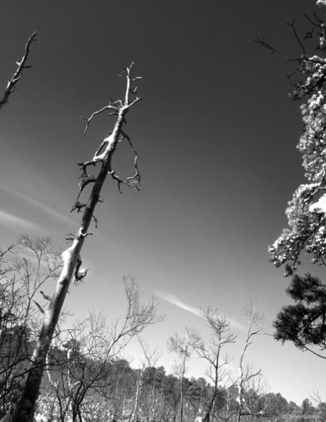 January Sky Near Bellows Pond