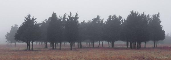 Amagansett Cedars