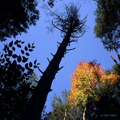Canopy II
