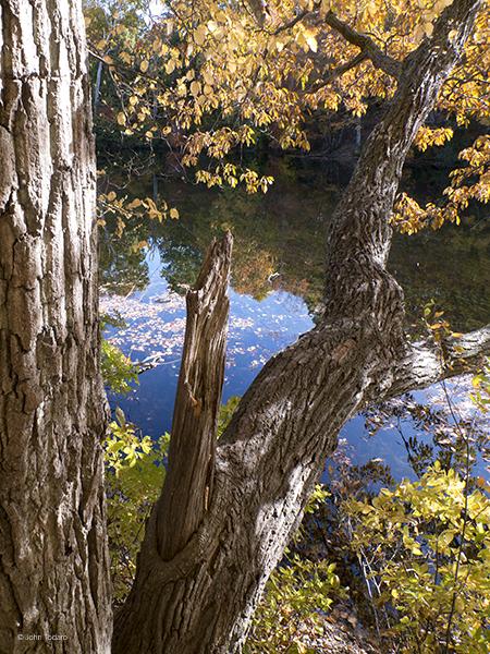 tupelo-trout-pond
