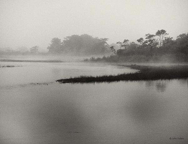 Marsh Monochrome