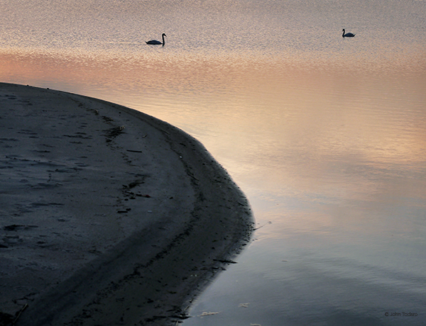 Swanscape