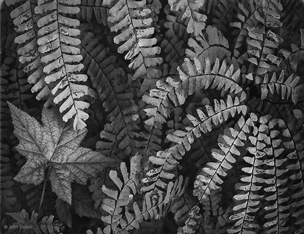 Dry Summer Ferns