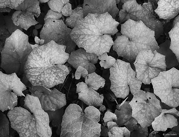 Leaf Jam