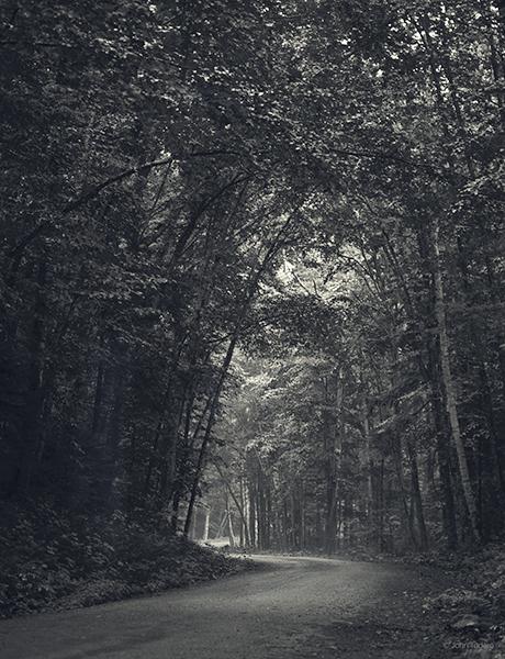 Forest Road Near Brandon Gap