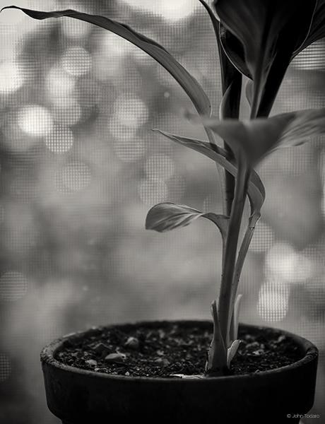 plant-by-a-window