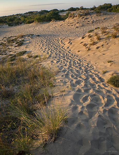 september-walking-dunes
