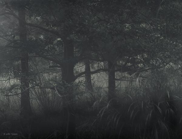 trees-near-jasons-rock