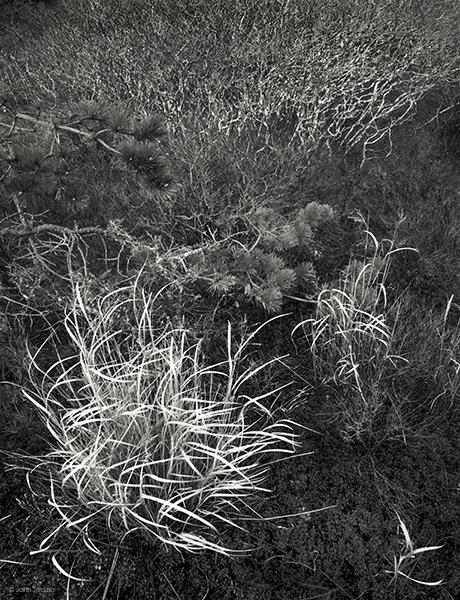 heathlands