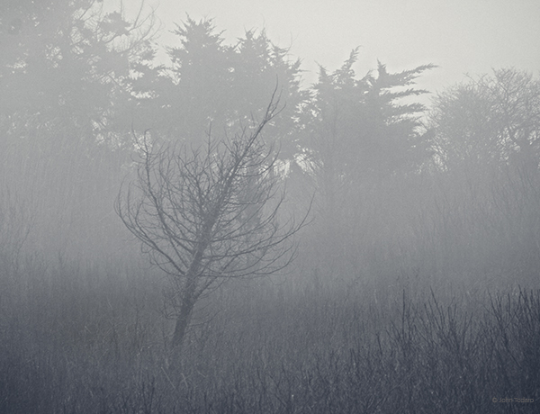 quogue-wetlands-fog