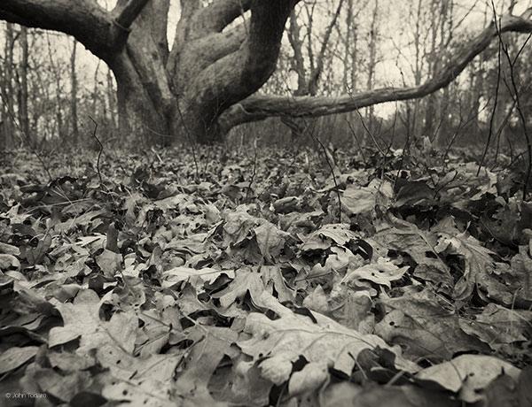 White Oak at Ram Level